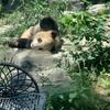 北京動物園は大盛況