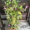 本日も避難中の植物たち(^_^*)