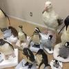 国立科学博物館、筑波一般公開!イルカの解剖、標本作成作業も見れる!