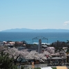 2021桜めぐり 静かなこどものくに 函館公園(3)