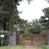 大阪高槻市にアボカドの木