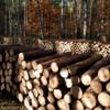 「木材」と「材木」の違い