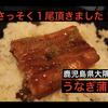 ふるさと納税『鹿児島県大隅産うなぎの蒲焼を食べた』(日常)(鰻・うなぎ)