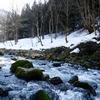 早春の渓流に佇む