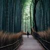 【京の冬の旅2016】嵯峨野・嵐山と三条会商店街を歩く