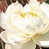 極楽浄土の花を見にゆく~「日比谷花壇大船フラワーセンター」訪問記~