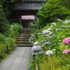金沢「アジサイ寺」(その1)