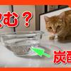 猫は炭酸水を飲むの?初めて炭酸水を見た猫たちの反応はこちら。Do cats drink carbonated water?