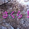 桜の写真です!良かったら、楽しんで下さい。