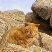山納め 猫の笑顔で癒されて、六甲〜有馬縦走。