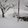 正月の神棚風に