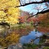 【お花見・紅葉13】 日比谷公園の紅葉 【ランチ】日比谷サロー 【サイクリングコース10】若洲公園お台場 沿い