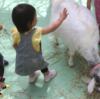 江戸川区自然動物園  無料で動物とふれあえる動物園