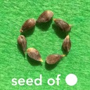seed of ◯
