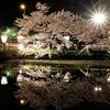 弘前公園の桜が続きます\(^o^)/