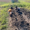 春の畑作業