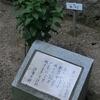 万葉歌碑を訪ねて(その654,655,656)―加古川市稲美町 中央公園万葉の森―万葉集 巻十 二一〇四、十一 二四八〇、巻二十 四三二六