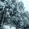 雪が降りました〜