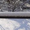 雪やこんこ♪