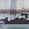その後のちび猫たち