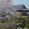 平城宮跡の桜(3月下旬~4月上旬)