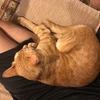 飼い猫のリトルビットが足元にくっついて、離れようとしません