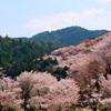 一目千本と謳われる絶景、吉野山の桜を見てきた。中千本・下千本母娘旅2018〜2日目