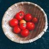 ジム再開。愛したトマト。