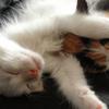 猫屋敷に住んでた僕が伝える猫を飼う時のアドバイス