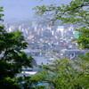 手宮緑化植物園と桐の花