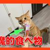 猫にちゅーるをあげる楽しみ。いなばペットフードさんありがとうございます。