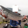 私の鮭釣り遠征は目梨泊から!!/ 今日の紋別流氷