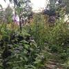 夏の終わりの庭