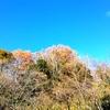 富田林の公園をひとりで散歩