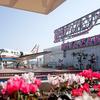 宮崎空港の愛称に使われてるブーゲンビリアってどんな花?