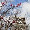 熊本城に紅梅咲き始める