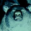 熊の増加と行動域拡大から考えられる恐るべき未来図