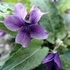 風布川の春の植物をたずねて