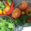 てんこ盛り夏野菜