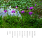 カキツバタ 紫色の 恋の結び目