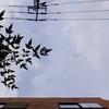 作曲工房 朝の天気 2018-10-31(水)ぎりぎり曇り