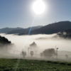 好評受付中!「お茶畑を1日で満喫できるフルコースツアー」茶摘みや茶葉の実食ができるハイキング