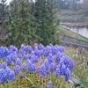 薪ストーブ原生代44 椎、欅、榎、桜、そして樫の玉切り
