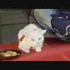 可愛くて笑える映画「猫侍・南の島へ行く」あらすじ・感想と評価 可愛っ!