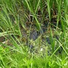 手賀沼実験池
