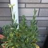 黄色い花が見えてきたよ^ ^