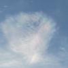 「彩雲」と「神様トンボ」目撃、その吉兆は?