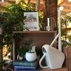 無印良品でガーデニングを楽しむ。観葉植物とシンプルでおしゃれな雑貨たち