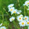 【正式発表】小林麻央がブログ開設!一度きりの人生を後悔しないように!