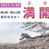 【津山城・鶴山公園】2021年3月30日「満開!」となりました。